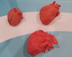 従来の方法で製作した心臓モデル