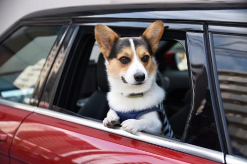 図1 犬の置き去りを検知するデモ