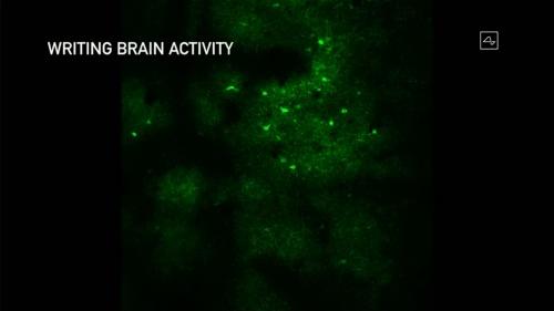 上の画像の赤い部分は電極に電流を流して刺激を加えたことを表す。それに応じて発火したニューロンが明るい緑色の点として表現されている。下の画像は刺激を加えた直後の状態で、電極からかなり離れた左下の部分などにも発火したニューロンがあることが分かる。縮尺は不明だが、従来の研究から推測すると数百μm離れた場所のニューロンも発火するとみられる(出所:Neuralink)