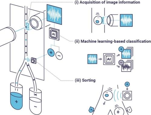様々なパターンで光を細胞に照射したときの波形データをAIが解析する