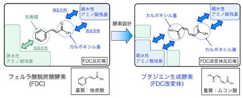 ブタジエン生成酵素の酵素デザイン