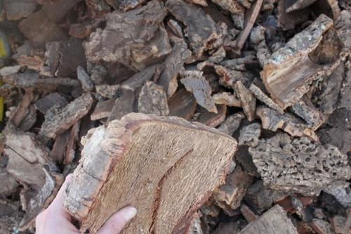 コルクブロックのもととなるコルクチップ。繊維が粗いなど、品質が低く、コルク栓の材料としては不適とされる(写真:Andrew Laurence)