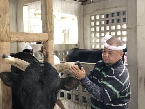 牛舎へ見学に行くと、出場前の牛の角にヤスリを掛けて鋭利に尖らせているではありませんか。「真剣勝負だからね」と。