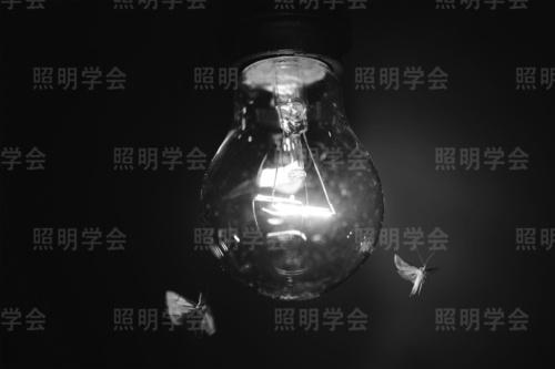 図1 白熱ランプに誘引されたガ類