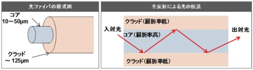 図1 光ファイバの模式図(左)、光の伝送原理