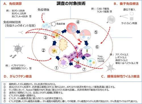 図1 【本調査の対象技術とがん免疫サイクル】