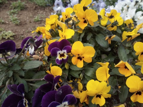 花を撮った写真