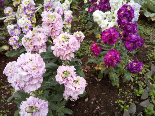 AIオートで花を撮影した写真。対象物を花と認識し、画面には花のアイコンが表示された