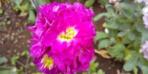 「接写」モードで、花に近づいて撮影した写真