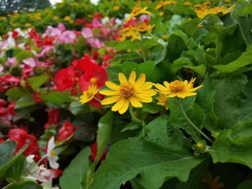 「AIオート」で公園の花を撮った作例。近くのものにピントが合い、背景がぼけた