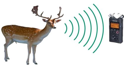 シカの鳴き声をマイクロホンで録音して、解析する(資料:東京大学生産技術研究所・沖一雄特任教授らの研究グループ)