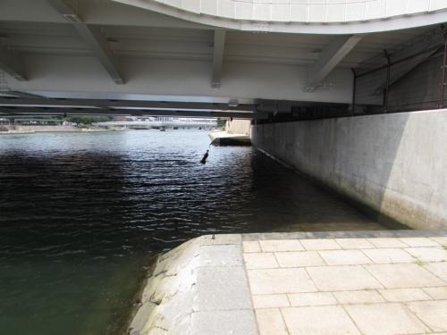 改修前の中の橋(太陽の橋)。遊歩道は橋の下で途切れていた(写真:北九州市)