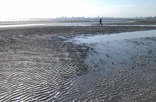 三番瀬の干潟。三番瀬の埋め立て問題を受け、第二東京湾岸道路の検討は20年近く中断していた(写真:千葉県)