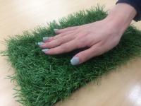 芝丈が30mmと長く、触り心地がいい(資料:しばんちゅ)