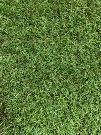 芝の密度が高く、さけにくい(資料:しばんちゅ)