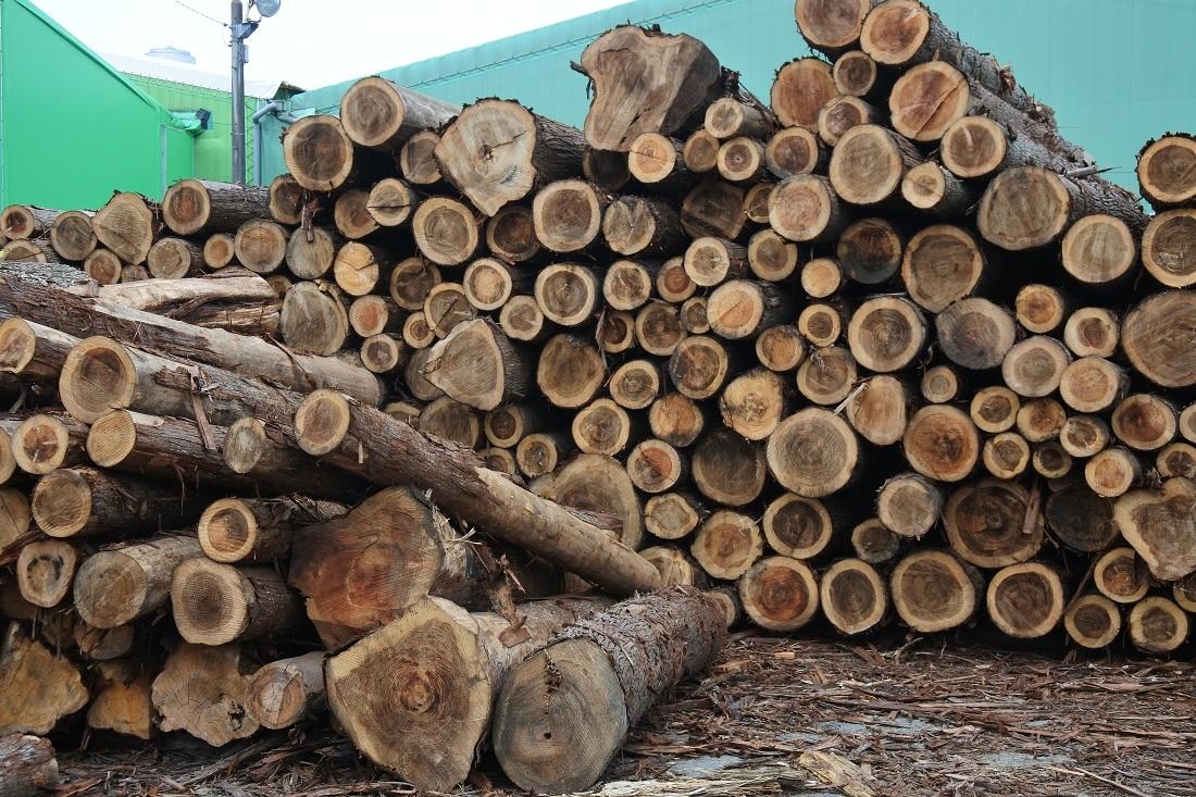 図2●FITによるバイオマス発電によって600万m3の間伐材が山から搬出されるようになった (出所:日経BP)