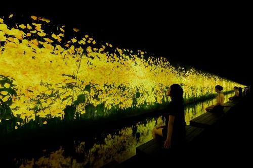 TikTok チームラボリコネクトの展示作品「降り注ぐ雨の中で増殖する無量の生命」(写真:チームラボ)