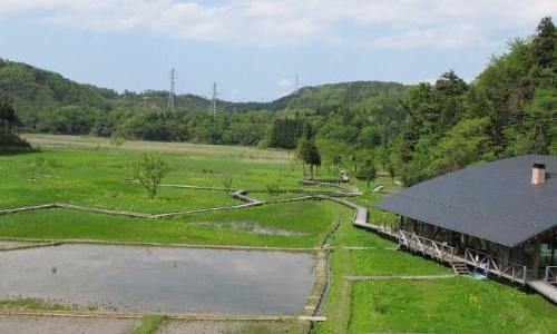 ラムサール条約に登録された福井県敦賀市の中池見湿地(写真:鉄道建設・運輸施設整備支援機構)