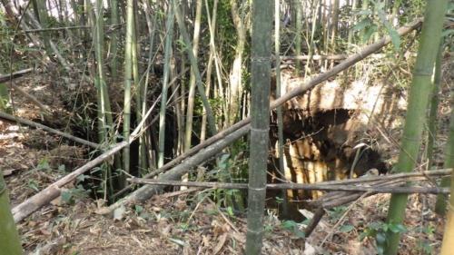4月8日に陥没した箇所。直径は約8m、深さは約5m。一帯は雑木林になっている(写真:鉄道建設・運輸施設整備支援機構)