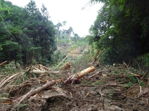 2018年7月の西日本豪雨で天然ダムが発生した京都府福知山市の谷河川(たにごがわ)。府からの要請を受けた日本工営は土砂崩れで山道が不通の中、現場に入って天然ダムの概要を調査した(写真:日本工営)
