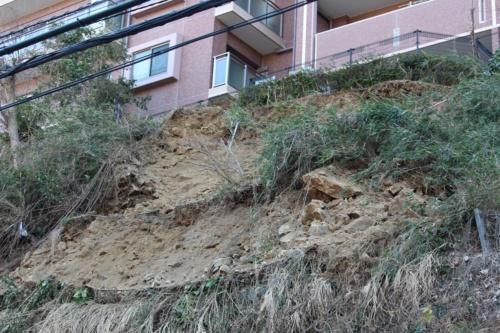 土砂が崩落した斜面の表層部。2月6日撮影(写真:日経クロステック)