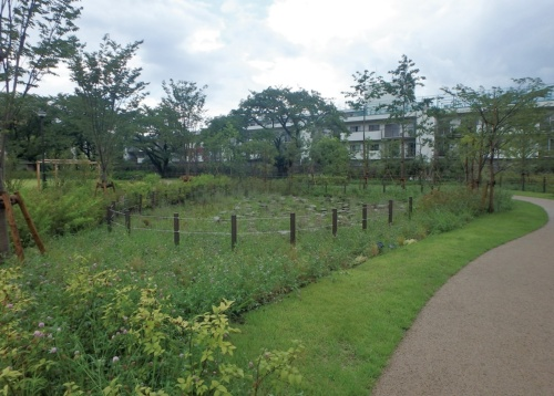 東京都世田谷区が上用賀公園に設置した雨庭(レインガーデン)。雨水を地中に浸透させる緑地帯だ(写真:世田谷区)