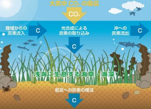 海草や海藻など海洋生態系が二酸化炭素を取り込むイメージ(資料:ジャパンブルーエコノミー技術研究組合)