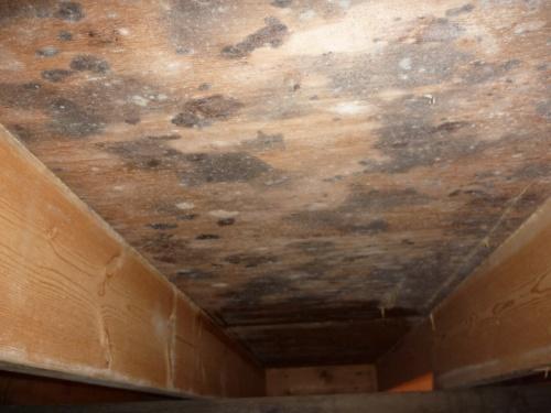 入居から6年目に建て主がアレルギー疾患を発症した住宅の床下。床下地合板に大量発生していたカビがアレルギー疾患を招いた(写真:プレモ)