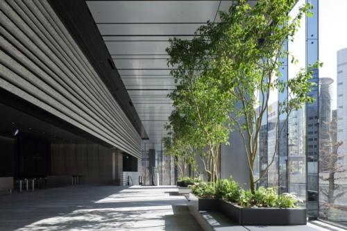 2019年3月、東京・渋谷に竣工した「渋谷ソラスタ」。写真は、2階のエントランスホール。2層吹き抜けでベンジャミンの植栽が置かれている。生体リズムに配慮して調光する「サーカディアン照明」を採用(写真:東急不動産)