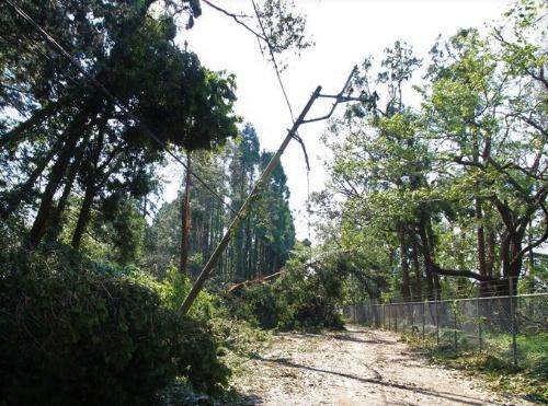 電線に倒れ掛かる倒木。市原市で9月10日に撮影。林業関係者がこうした現場を発見しても電力会社の職員が到着するまでは倒木を撤去できない(写真:日経 xTECH)