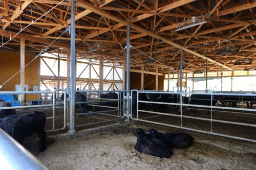 水牛用の牛舎内。水牛は一般的な乳牛に比べ、搾乳量が非常に少なく飼育も難しいため、国内での実例は限られる(写真:日経 xTECH)