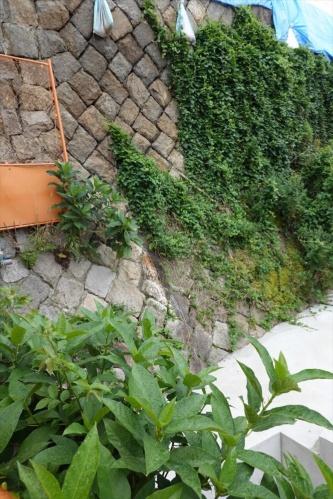 擁壁の北側の空石積み。裏込め土と石だけでつくられている。写真の左下部分には膨らみが見られる(写真:日経クロステック)