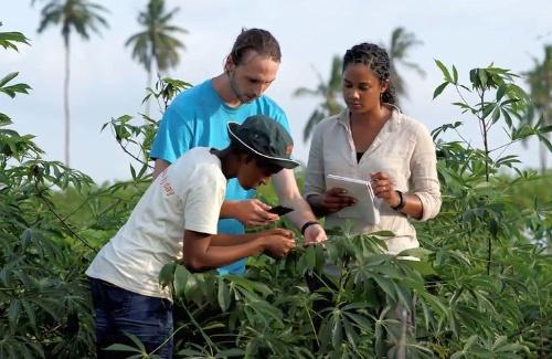 キャッサバの病害を見つけ出す「PlantVillage」プロジェクト