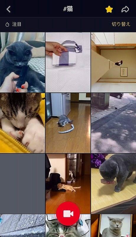 「#猫」の動画が検索されました。タップすると再生します