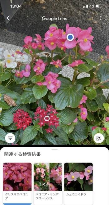植物の名前も調べることができる