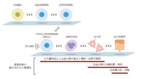 図1 ヒトiPS細胞由来血小板製剤の製造フローと要素技術の関係