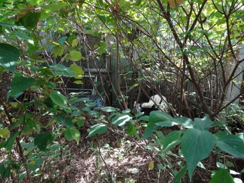 草木が生い茂るジャングルのような場所で、水道メーターの検針を実施してきた