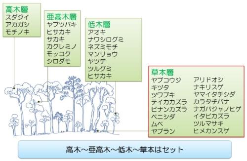 ヤブコウジ―スダジイ群集の構成例(資料:大成建設)