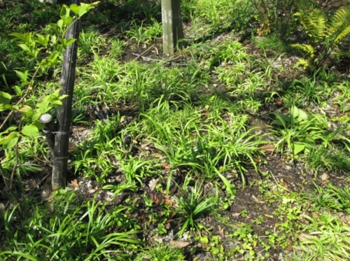ポット苗を植えた様子。裸地ができている(写真:大成建設)