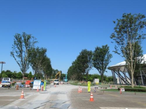 植栽後の熊谷スポーツ文化公園。駐車場からラグビー場へ向かう道に高さ10mのケヤキを63本植えた。シミュレーション結果に基づいた施工は18年8月に完了した(写真:埼玉県)
