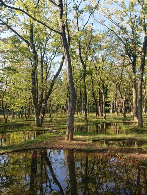 石上氏が設計したランドスケープ「水庭」(写真:日経アーキテクチュア)