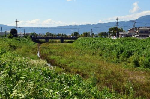 草津川の旧河道(写真:大井 智子)