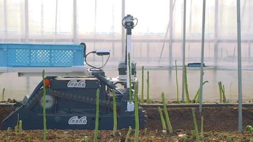 inahoが開発している自動野菜収穫ロボットの試作品。アスパラガスを手始めに、さまざまな野菜の収穫に対応していく計画だ。浜野製作所は2019年1月から、このロボットの車両部分の開発をサポートしている。(出所:inaho)