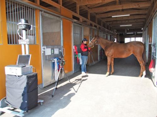 北海道新冠郡新冠町で実施された実証実験の様子。8Kカメラで軽種馬を撮影し、5Gで伝送することで軽種馬の細かな部分の育成具合を確認できるという。写真は2019年11月13日の「8Kライブ映像を活用した軽種馬育成支援の実証試験」より(筆者撮影)