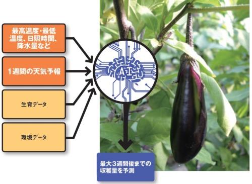 ナスなどの収穫量を予測する高知県の取り組み