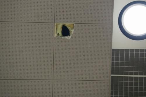 損傷のあった天井部分を見上げる。落下した天井部材は、20cm角程度の大きさだったという(写真:日経アーキテクチュア)