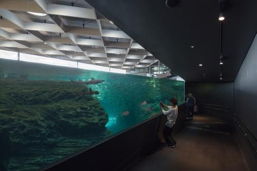 日本海の海底地形を再現した「うみがたり大水槽」(写真:浅田 美浩)