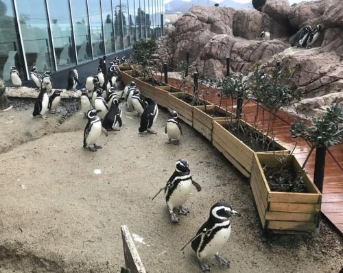 うみがたりの2階にある「マゼランペンギン ミュージアム」(写真:上越市教育委員会)
