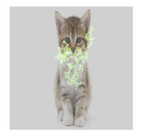 画像から「猫」を検出する機械学習モデルについて、画像内のどのピクセルが検出に大きく寄与したかを緑色で示した