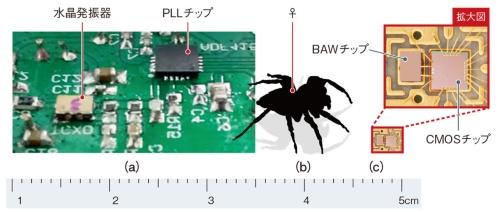 図6 原子時計用BAW発振器のサイズイメージ